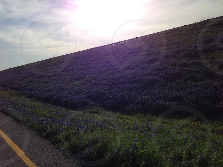 Texas Highways & Bluebonnets photo