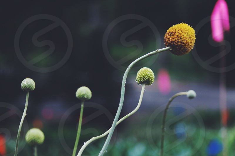 yellow flower on the field photo