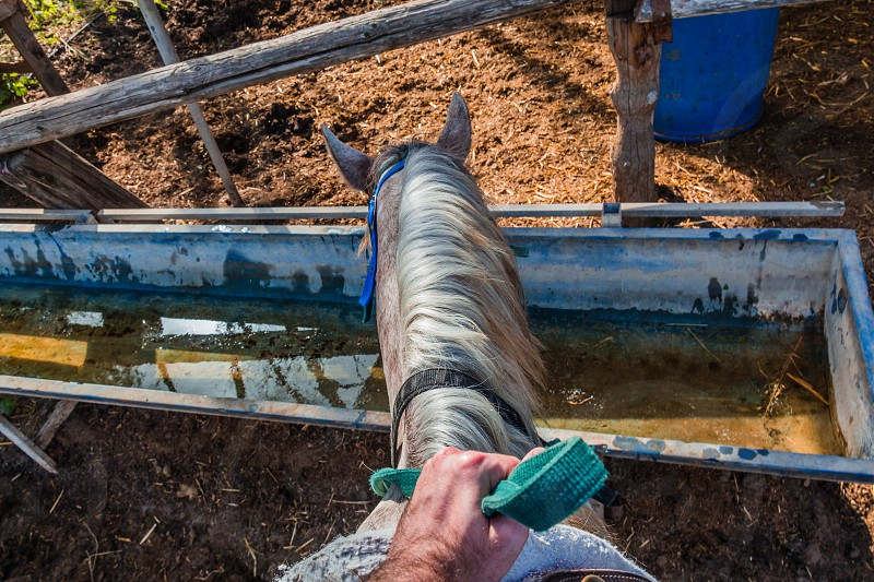 Horse drinks water from a water tank - Rider first person pov. photo