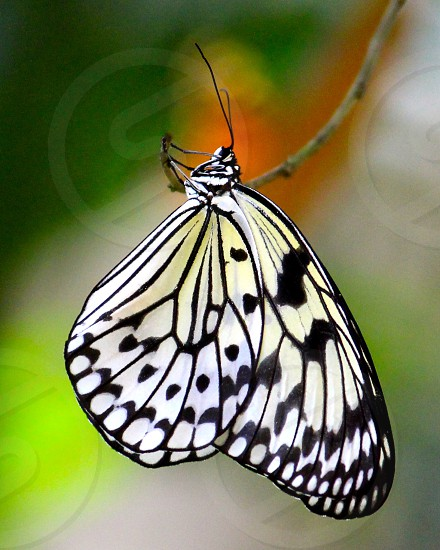 paper kite butterfly photo