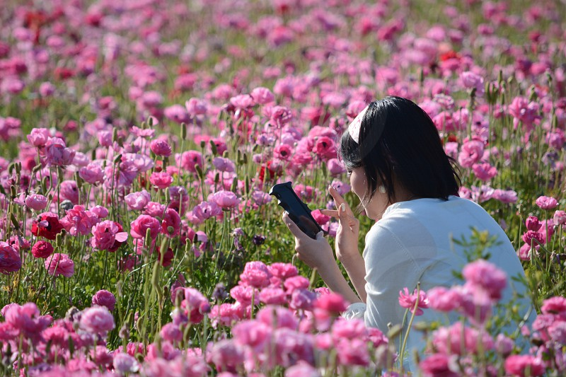 woman in white dress seating on the purple petaled flower garden using her smartphone during daytime photo
