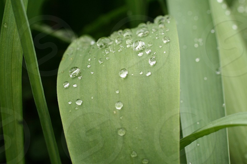 water dew on green leaf macro shot photo