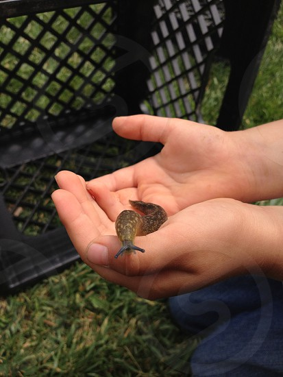 Banana slug found at the preschool being gently held in the child's hands. photo