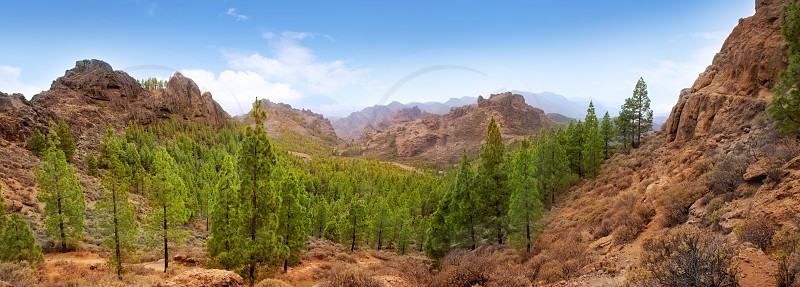 Gran Canaria Tejeda La culata mountains panoramic with pines in canary Islands photo
