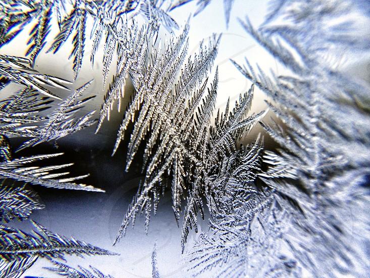 snow flakes macro photography photo