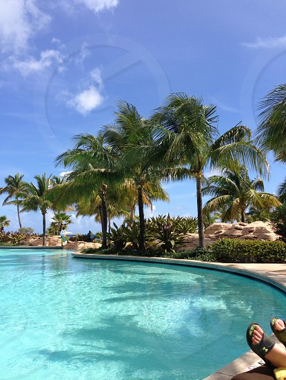 inground pool surrounded by palm trees photo