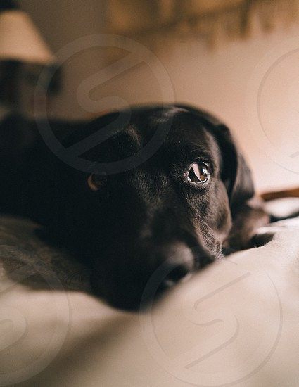 A portrait of my dog photo