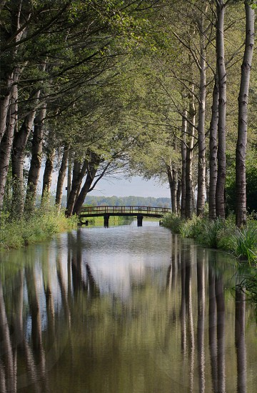 river with brown wooden arc bridge in the middle of a forest during day photo