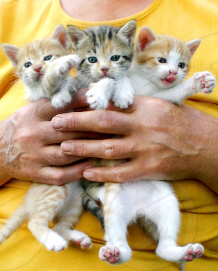Three little kittens in a human hands                        photo