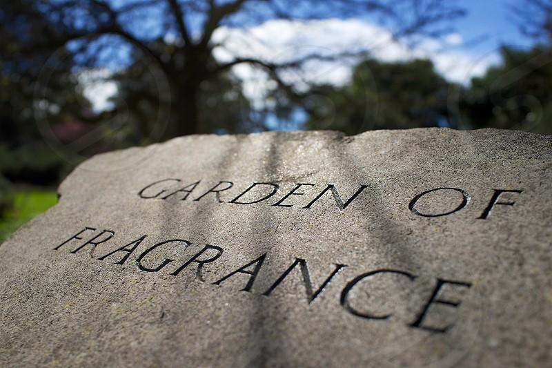 garden of fragrance  photo