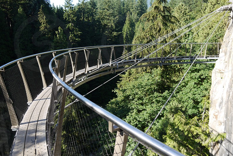 Silver curved suspension bridge over hte trees photo