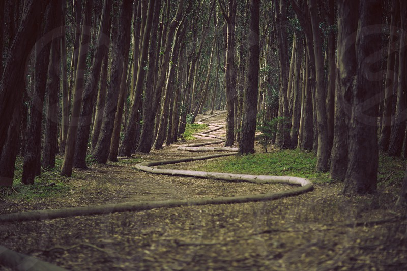 Wood Line by Andy Goldsworthy The Presidio San Francisco trees forest art green woods photo