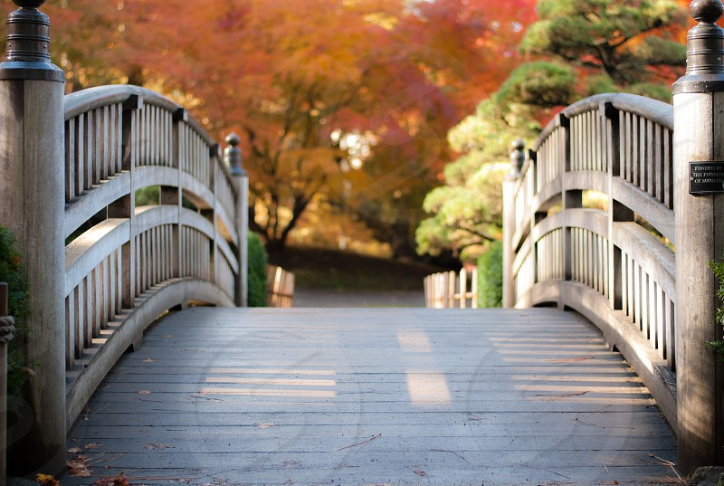 Arched bridge in beautiful park with fall colors photo