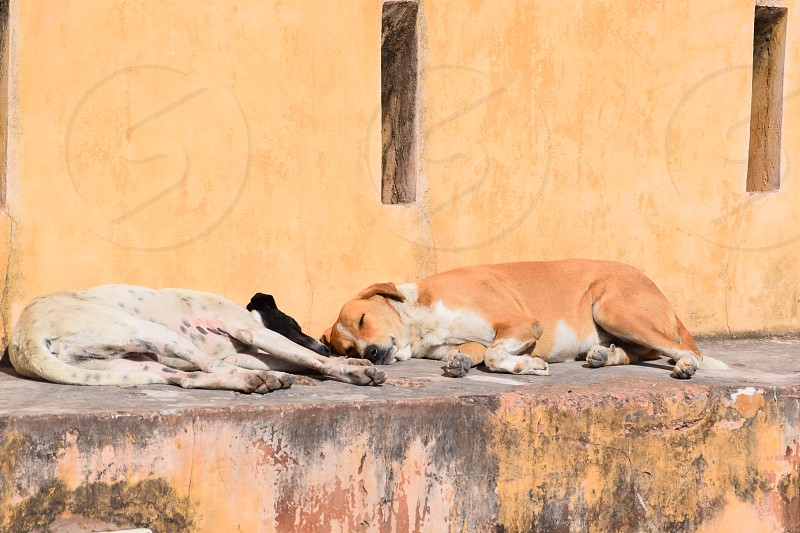 Dog's sleeping yellow wall photo