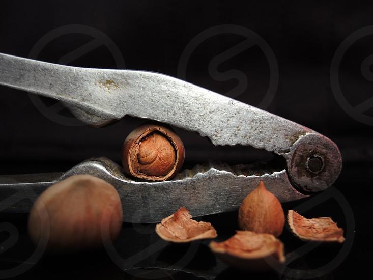 nutcracker cracking chestnut photo