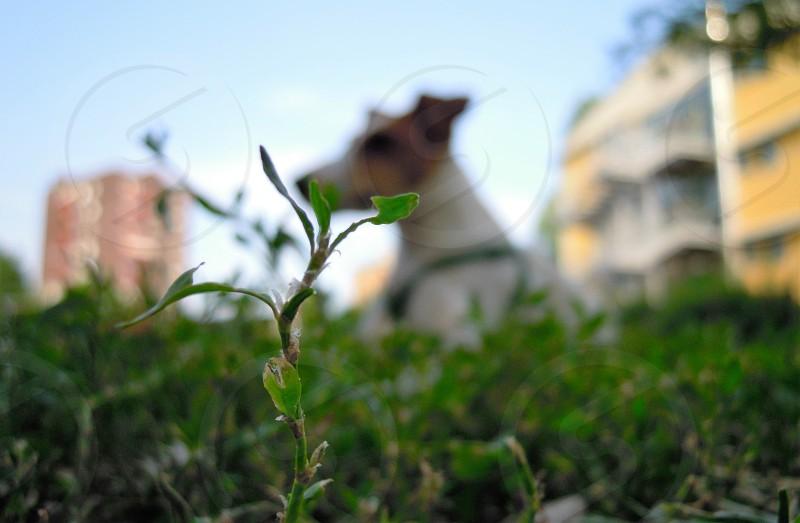 spring flower leaf photo
