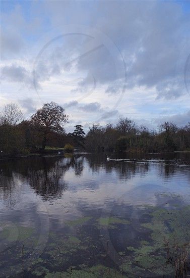 Wanstead Park - Lake in Winter photo