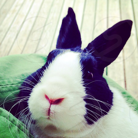 Cute bunny photo