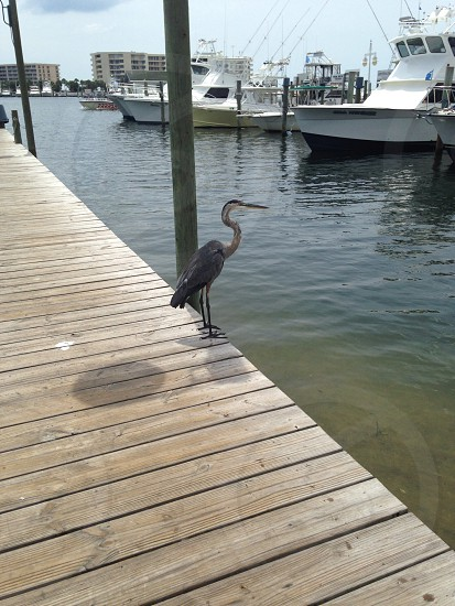 grey long beaked bird photo