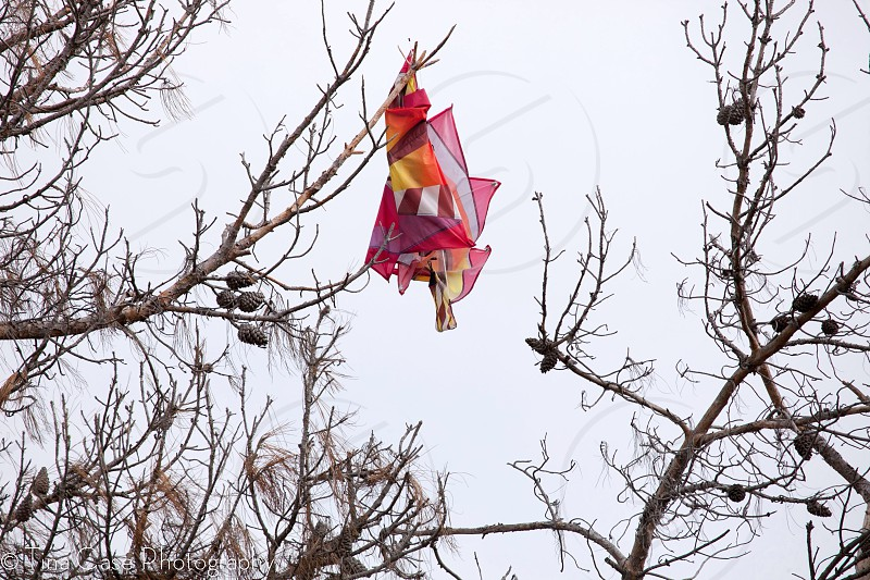 colorful pink purple fabric hanging from bare tree branch photo