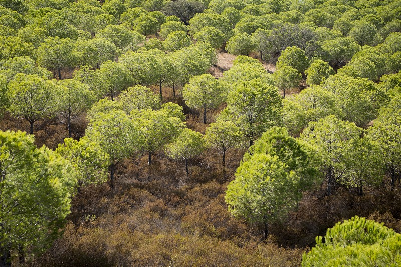 the forest near the Rio Guadiana River near the town of Alcoutim at the east Algarve in the south of Portugal in Europe. photo