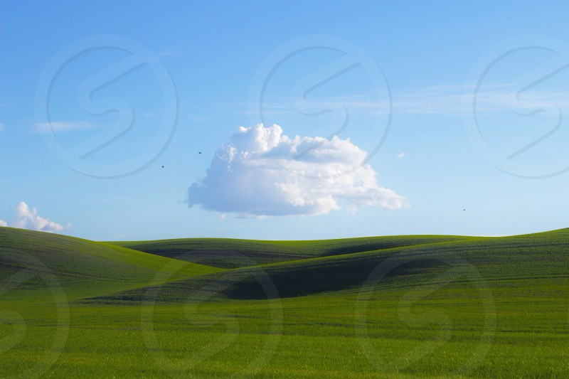 green grass blue sky white cloud\ photo