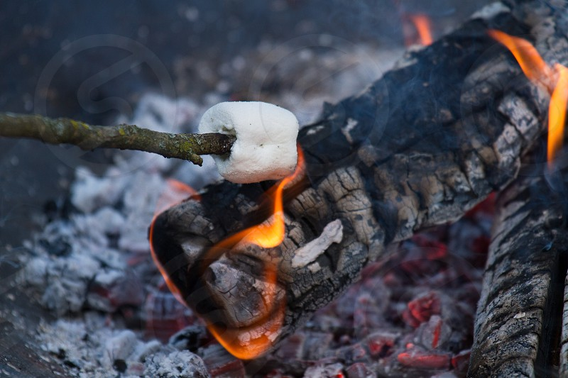 Making roasted marshmallows for smores over a camp fire photo