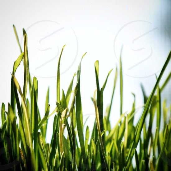 green grasses view photo