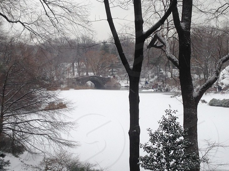 Snowy December Day in Central Park photo