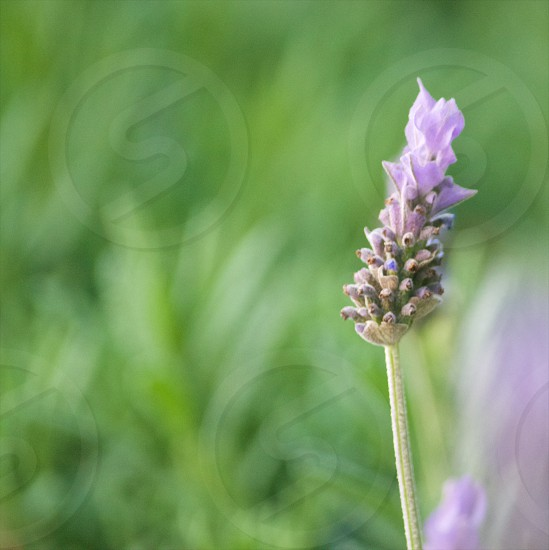 purple flowers macro photography photo