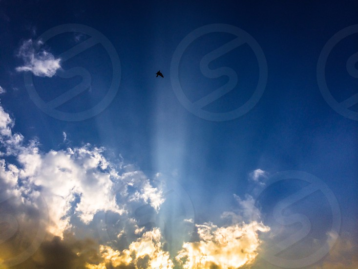 Dallas Texas sunset bird Sky cloudscape dusk golden hour rays  photo