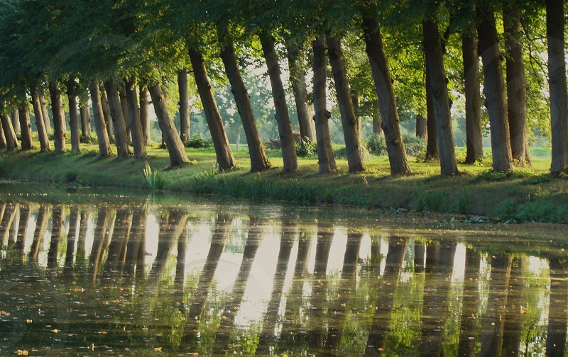 #trees #canal #water #nature #Dutch #landscape photo
