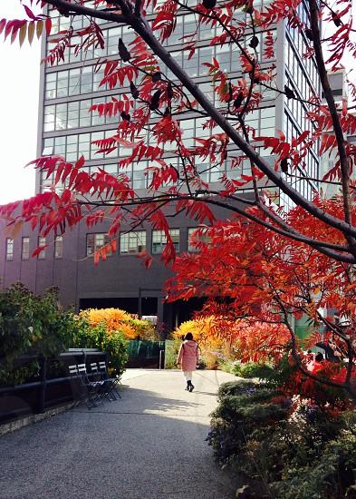 High Line Park New York City photo