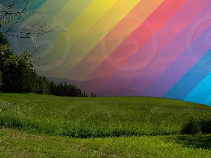 green grass land view photo