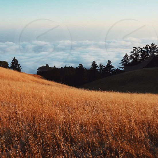 brown high grass hillside with trees and white clouds in the distance photo