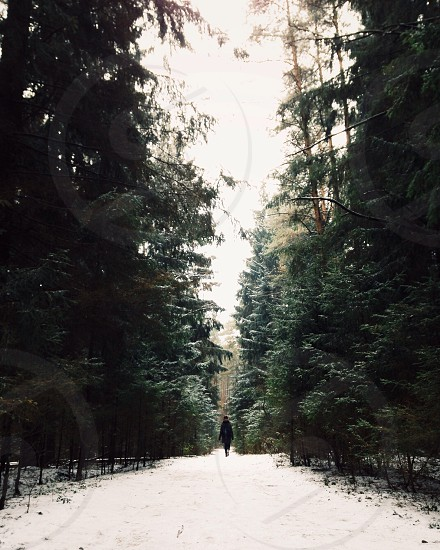 per.son walking through a snow covered forest with pine trees photo