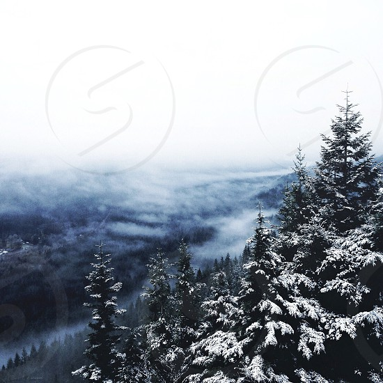 snow covered trees near misty mountain photo