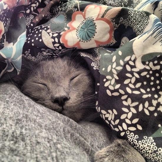 Kitty snuggles  photo