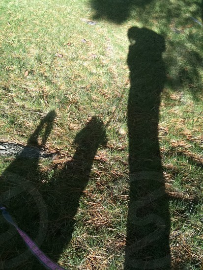 Long shadows of the winter sun my dog and me on a walk in the woods  photo