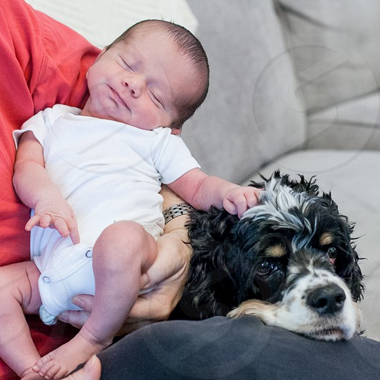 New baby sleeping with his hand on his cocker spaniel's head. photo