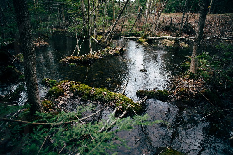 Spring pools in northern Wisconsin. photo