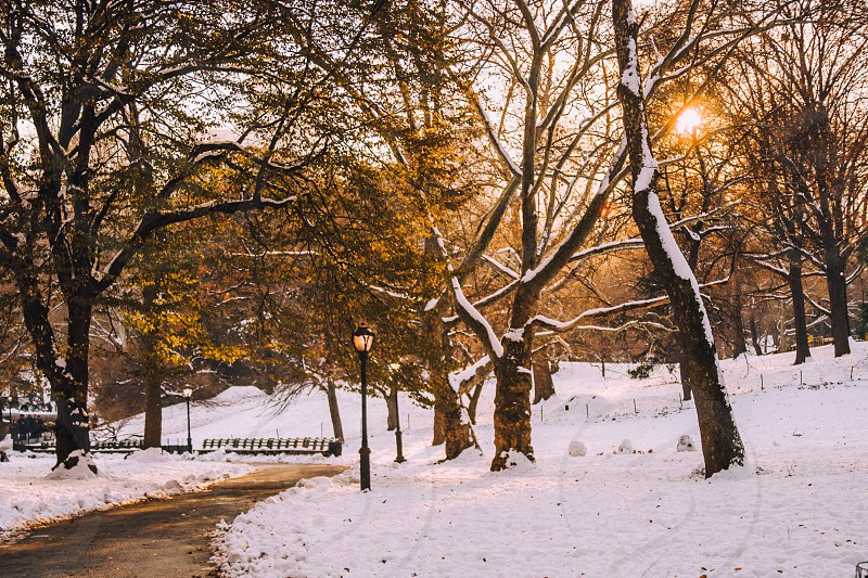 Central Park winter cold snow NYC  Manhattan park photo