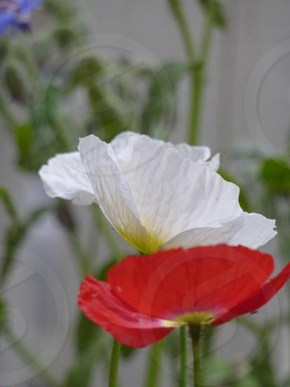 white petaled flower photo