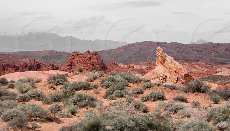 Fall in the desert  photo