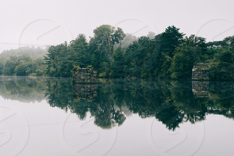 misty forest beside a lake during daytime photo