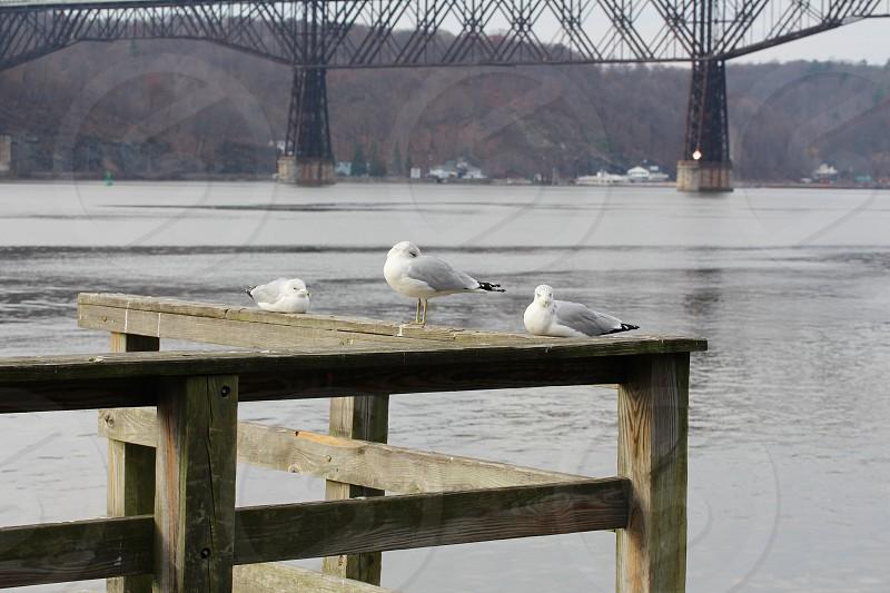 3 birds photo
