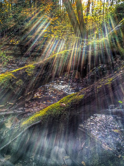 sunlight shining on mossy logs and deciduous trees photo