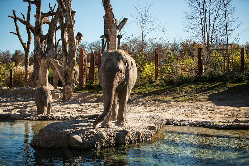 Zoo Zuerich Switzerland Elefants photo