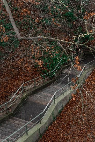 staircase in woods bern Switzerland photo