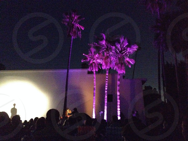 Purple palm trees photo